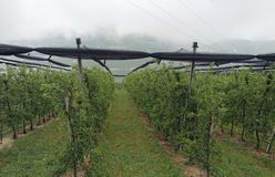Giacimento del vino Fotografia Stock Libera da Diritti
