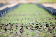 Giacimento dell'asparago Immagini Stock