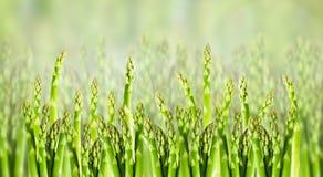 Giacimento dell'asparago, fine su, insegna per il sito Web Fotografia Stock