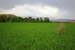 Giacimento dell'erba medica Fotografie Stock