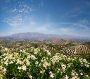 Giacimento dell'oliva e del vino Immagini Stock Libere da Diritti