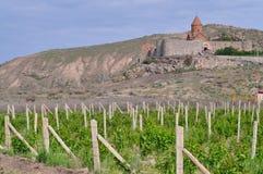 Giacimento dell'uva in valle dell'Ararat Vista del monastero di Khor Virap Immagine Stock Libera da Diritti