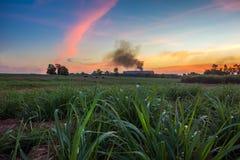 Giacimento della canna da zucchero con il tramonto del paesaggio del fondo dello zuccherificio Fotografia Stock