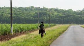 Giacimento della canna da zucchero della provincia della campagna di Cuba con il gaucho Fotografie Stock Libere da Diritti