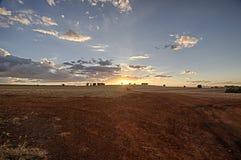 Giacimento della canna da zucchero dopo il raccolto al tramonto Fotografia Stock