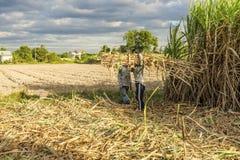 Giacimento della canna da zucchero, provincia di Tay Ninh, Vietnam Fotografia Stock Libera da Diritti