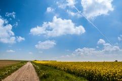 Giacimento della colza con cielo blu Immagini Stock