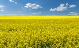 Giacimento della colza con il cielo fantastico della molla Fotografia Stock Libera da Diritti