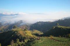 Giacimento della fragola della Tailandia di chiangmai della montagna di Doi Angkhang Immagini Stock