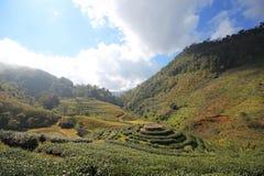 Giacimento della fragola della Tailandia di chiangmai della montagna di Doi Angkhang Fotografia Stock Libera da Diritti