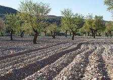 Giacimento della mandorla dell'Andalusia recentemente arato Fotografia Stock Libera da Diritti