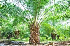 Giacimento della palma Immagini Stock