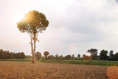 Giacimento della patata del paesaggio dopo il raccolto Immagine Stock