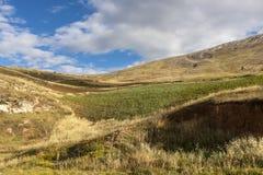 Giacimento della patata, metri del 3800 di altitudine nelle Ande del Perù Immagini Stock