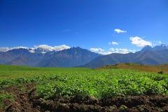 Giacimento della patata nelle alte montagne Immagine Stock