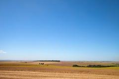 Giacimento della soia al raccolto Immagini Stock