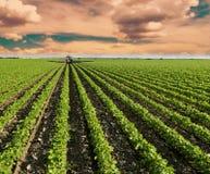 Giacimento della soia che matura alla stagione primaverile, paesaggio agricolo Giacimento di spruzzatura del trattore rosso Fotografie Stock