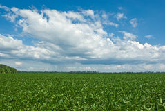 Giacimento della soia con la nube di pioggia Fotografie Stock