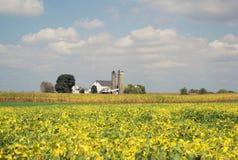 Giacimento della soia nella fine dell'estate Fotografie Stock