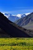 Giacimento della valle e di fiore dell'alta montagna in India del Nord Fotografia Stock