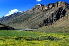 Giacimento della valle e di fiore dell'alta montagna in India del Nord Immagine Stock