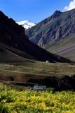 Giacimento della valle e di fiore dell'alta montagna in India del Nord Fotografie Stock Libere da Diritti
