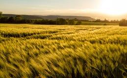 Giacimento di cereale Fotografia Stock Libera da Diritti