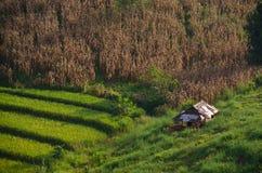 Giacimento di cereale e del riso fotografia stock libera da diritti