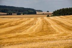 Giacimento di cereali di estate fotografia stock