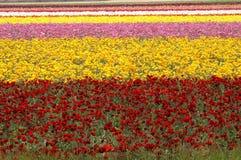 Giacimento di fiore Fotografia Stock