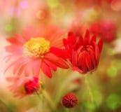 Giacimento di fiore Fotografie Stock