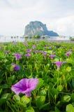 Giacimento di fiore Immagine Stock Libera da Diritti