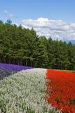 Giacimento di fiore Fotografie Stock Libere da Diritti