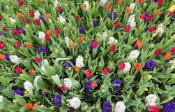 Giacimento di fiore con i vari fiori Fotografie Stock Libere da Diritti