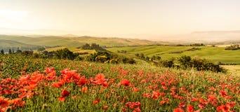 Giacimento di fiore del papavero nel bello paesaggio del paesaggio della Toscana in Italia, belvedere nella regione di Val d Orci fotografia stock libera da diritti