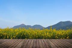 Giacimento di fiore del seme di ravizzone con il pavimento di legno e del cielo Fotografie Stock