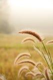 Giacimento di fiore dell'erba Immagini Stock
