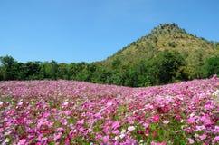 Giacimento di fiore dell'universo Fotografie Stock Libere da Diritti