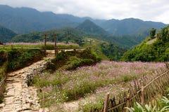 giacimento di fiore della valle Fotografia Stock Libera da Diritti