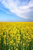 Giacimento di fiore di giallo della molla di estate Immagini Stock Libere da Diritti