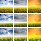 Giacimento di fiore e cielo dell'insieme della raccolta Immagini Stock Libere da Diritti