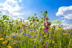 Giacimento di fiore di estate Fotografie Stock