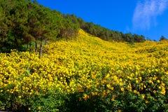 Giacimento di fiore giallo. Immagini Stock Libere da Diritti