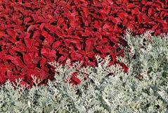 Giacimento di fiore multicolore Fotografia Stock