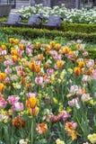 Giacimento di fiore in primavera in fioritura con tre sedie moderne Fotografia Stock Libera da Diritti