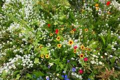 Giacimento di fiore selvaggio fotografia stock libera da diritti