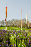 Giacimento di fiore in Tailandia del Nord fotografia stock libera da diritti