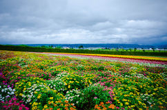 Giacimento di fiore variopinto Immagini Stock Libere da Diritti