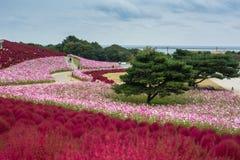 Giacimento di fiore variopinto nel giardino al parco di spiaggia Fotografie Stock