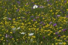 Giacimento di fiori Fotografie Stock